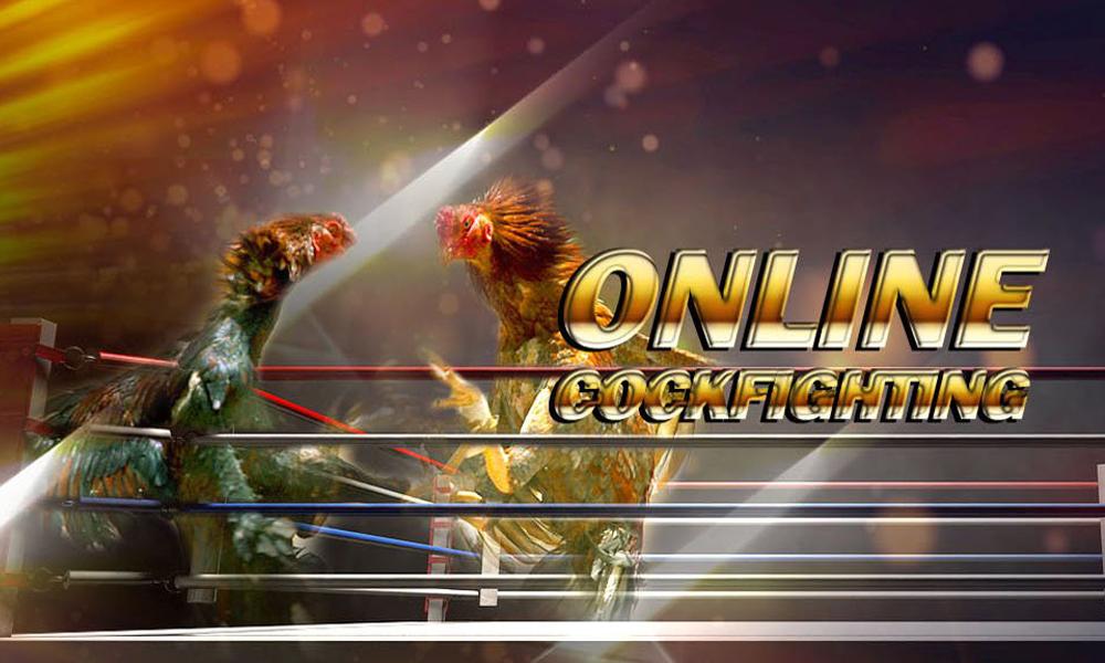 Tham gia đá gà trực tuyến tại SV388 uy tín hàng đầu